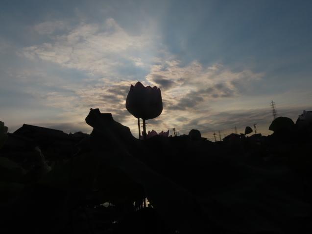 極楽浄土 蓮の花 2021/07/22_d0048812_10480210.jpg