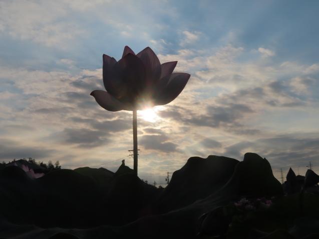 極楽浄土 蓮の花 2021/07/22_d0048812_10482163.jpg