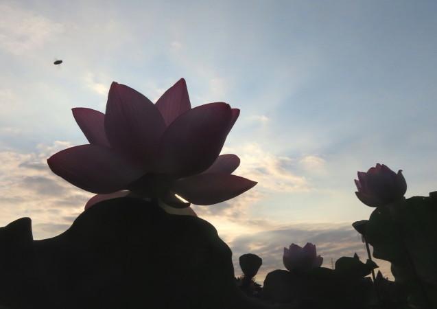 極楽浄土 蓮の花 2021/07/22_d0048812_10483474.jpg