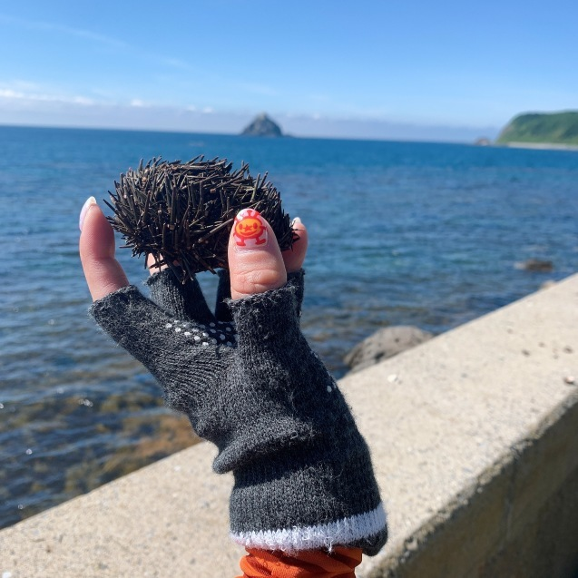 絶品!ウニを堪能ブロンプトン で奥尻島を走って来ました!前編_d0197762_19292902.jpeg