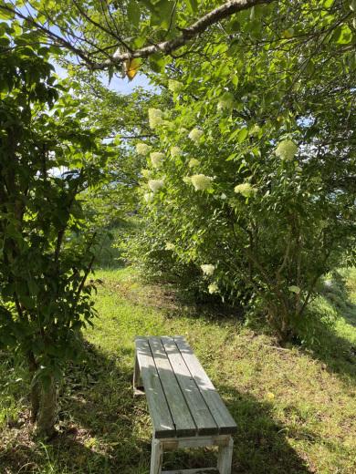 梅の土用干し & 裏山のノリウツギ_c0334574_16033874.jpeg