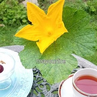 蓮の花が咲きました_d0169179_00130525.jpg