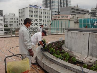 名古屋港水族館前花壇の植栽R3.7.12_d0338682_16132479.jpg
