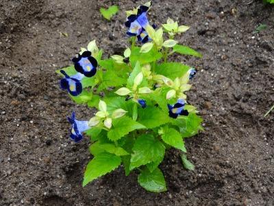 名古屋港水族館前花壇の植栽R3.7.12_d0338682_16162556.jpg