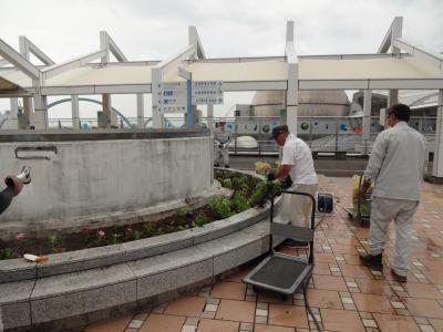 名古屋港水族館前花壇の植栽R3.7.12_d0338682_16173244.jpg