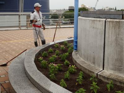 名古屋港水族館前花壇の植栽R3.7.12_d0338682_16173928.jpg