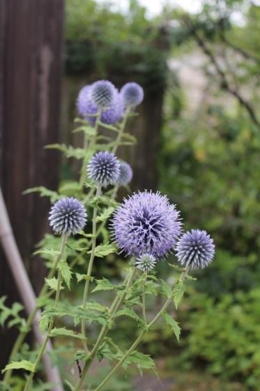 庭の花_b0132338_10350230.jpeg