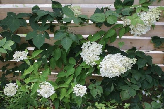 庭の花_b0132338_10351017.jpeg