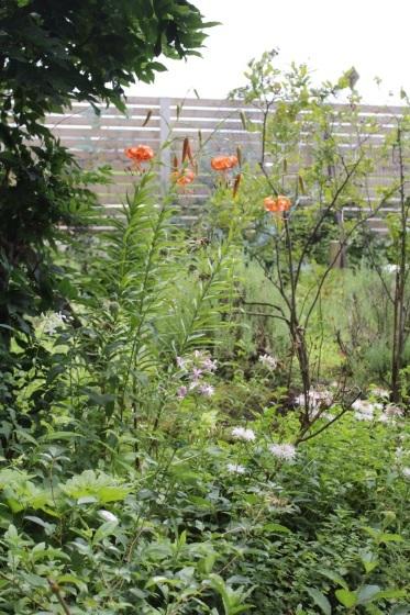庭の花_b0132338_10353217.jpeg
