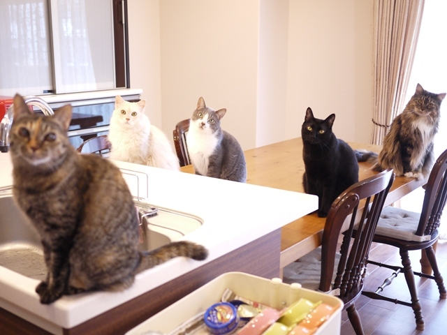 猫のお留守番 天ちゃん麦くん茶くん〇くんAoiちゃん編。_a0143140_19500098.jpg