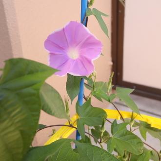 夏休みスタート_d0013443_10034885.jpg