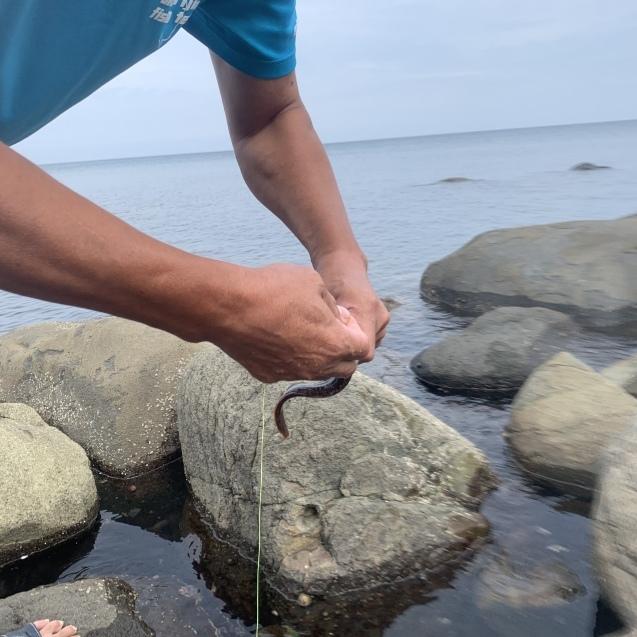 続・絶品ウニを堪能!ブロンプトンで奥尻島を走って来ました!後編_d0197762_04582036.jpeg
