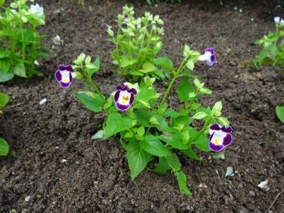 ガーデンふ頭総合案内所前花壇の植替えR3.7.12_d0338682_14312066.jpg