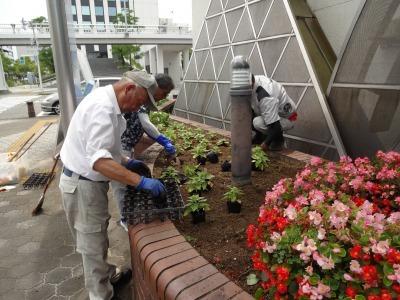 ガーデンふ頭総合案内所前花壇の植替えR3.7.12_d0338682_14342157.jpg