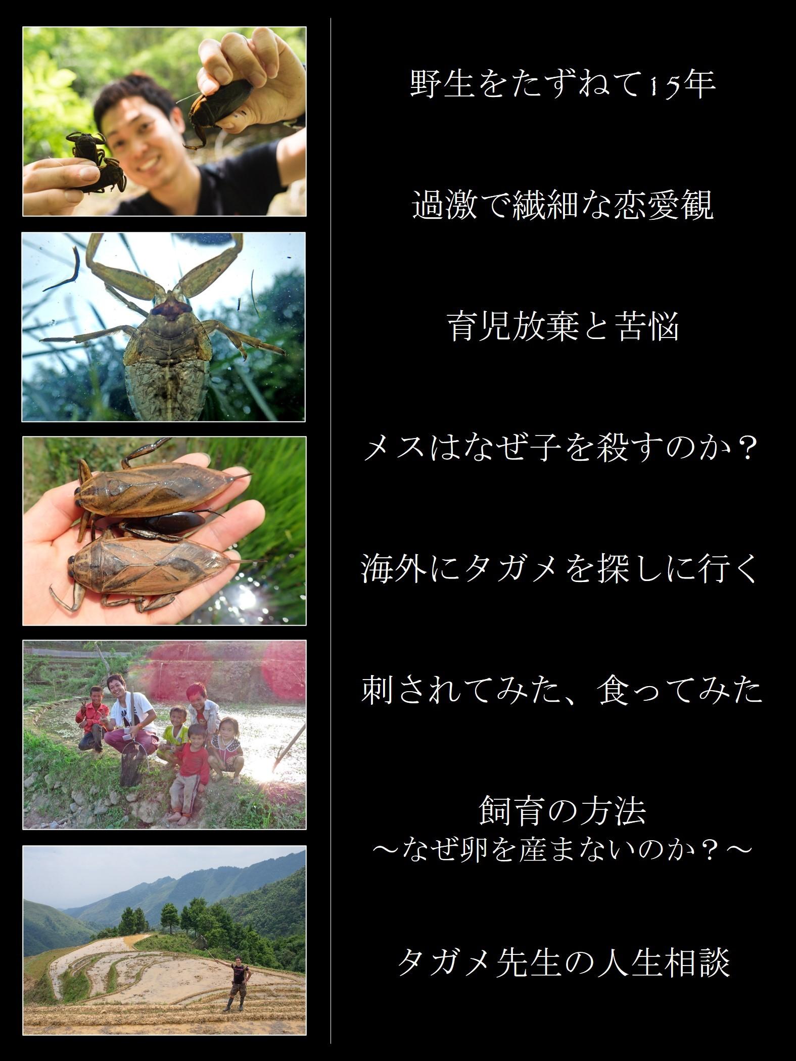 特別展示タガメ_a0386621_14283122.jpg