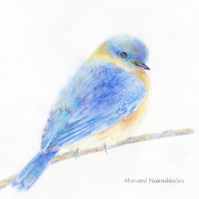しあわせのあおい鳥_e0208066_15405749.jpg