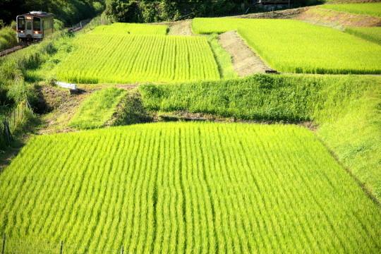 田園風景の名松線_f0266284_11522119.jpeg