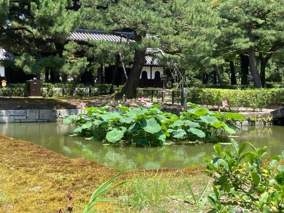 京都へ。_a0098418_06345787.jpg