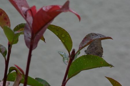 2021年6月下旬~7月 埼玉県北部拙宅の虫観察_c0353632_06513444.jpg