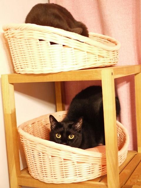 ピンクのベッド猫 あんしゃぁりぃめりぃぽぴんず編。_a0143140_23250775.jpg