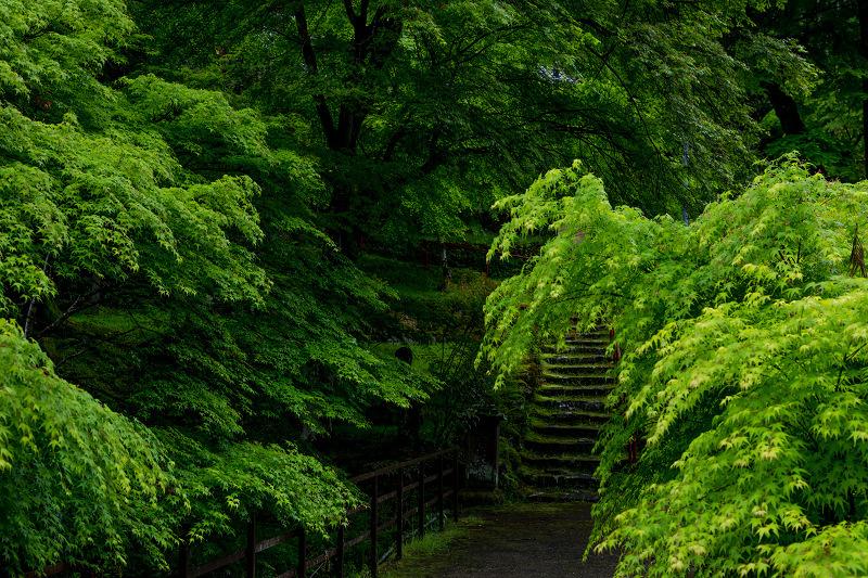 新緑とクリンソウ(杉坂地蔵院)_f0155048_21500234.jpg