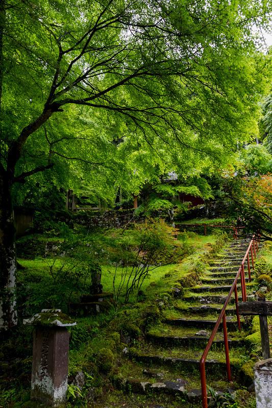 新緑とクリンソウ(杉坂地蔵院)_f0155048_21501140.jpg