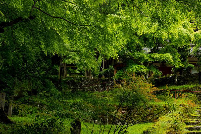 新緑とクリンソウ(杉坂地蔵院)_f0155048_21501364.jpg