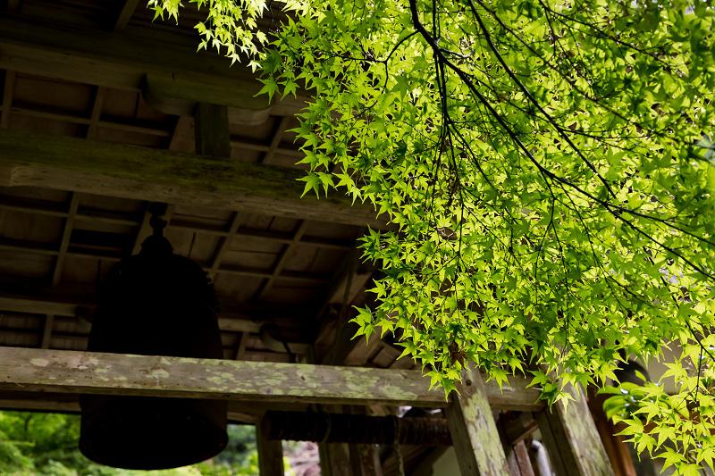 新緑とクリンソウ(杉坂地蔵院)_f0155048_21501951.jpg
