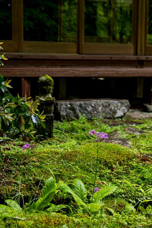 新緑とクリンソウ(杉坂地蔵院)_f0155048_21533555.jpg