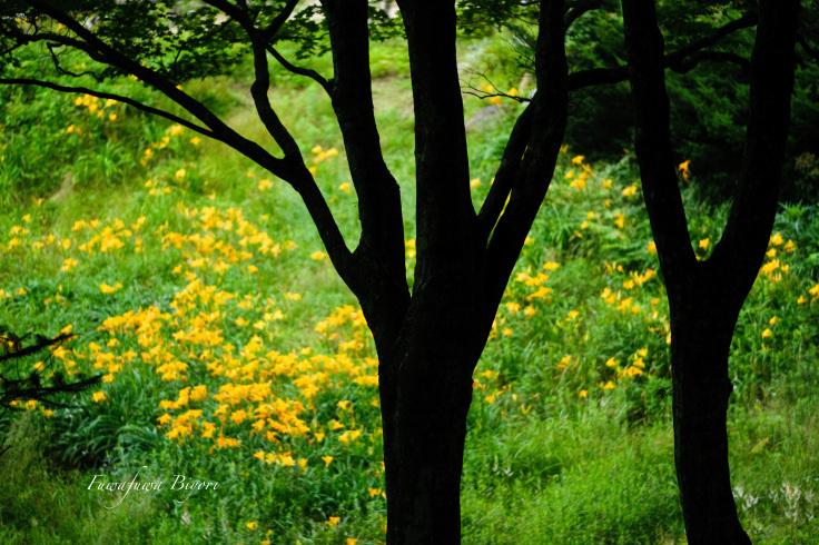 雨に濡れた植物 **_d0344864_20380780.jpg