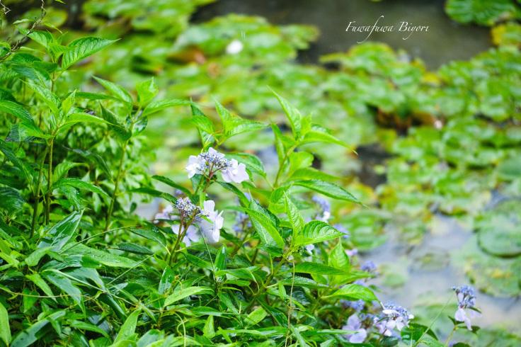 雨に濡れた植物 **_d0344864_20381394.jpg