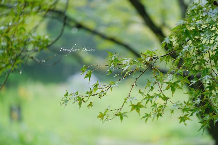 雨に濡れた植物 **_d0344864_20381934.jpg