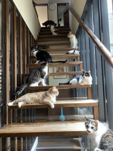 【友人宅の猫】7月、渋谷の猫たち。_a0170297_11270721.jpeg