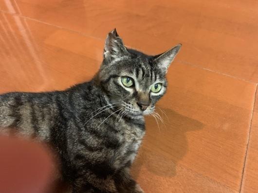 【友人宅の猫】7月、渋谷の猫たち。_a0170297_11274144.jpeg