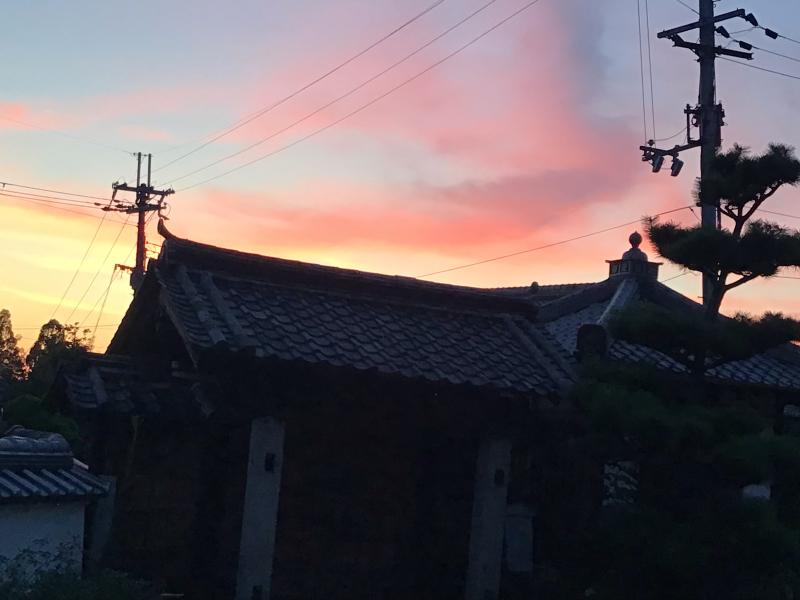 夜8時前に撮った庭の花_c0404712_22004713.jpg