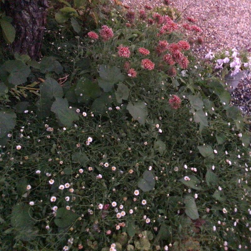 夜8時前に撮った庭の花_c0404712_22010431.jpg