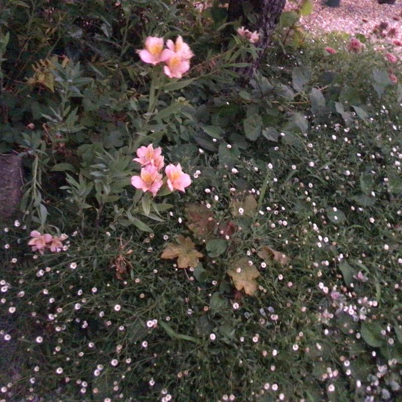 夜8時前に撮った庭の花_c0404712_22010590.jpg