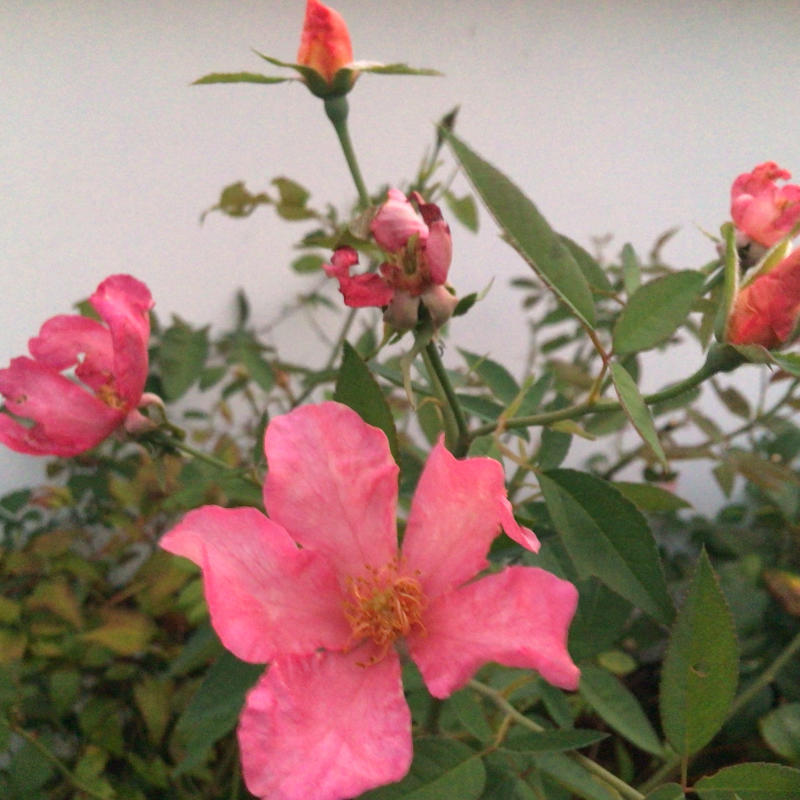 夜8時前に撮った庭の花_c0404712_22010720.jpg