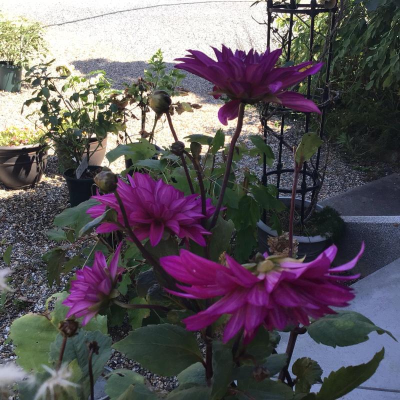 夜8時前に撮った庭の花_c0404712_22020879.jpg