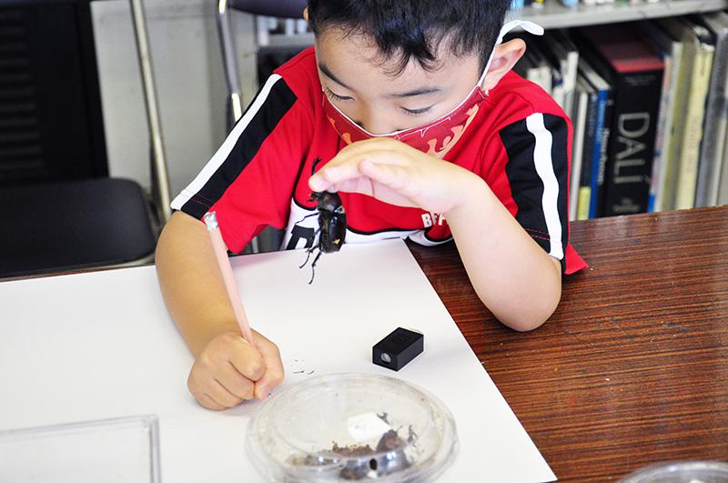 児童画クラス「カブトムシを描こう」_b0212226_11074733.jpg