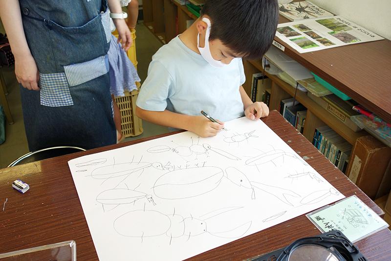 児童画クラス「カブトムシを描こう」_b0212226_11141513.jpg