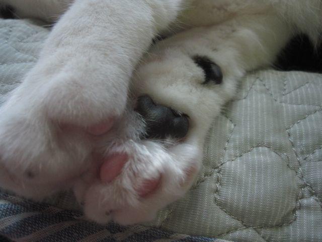 猫とゴロゴロ_c0292328_22211319.jpg