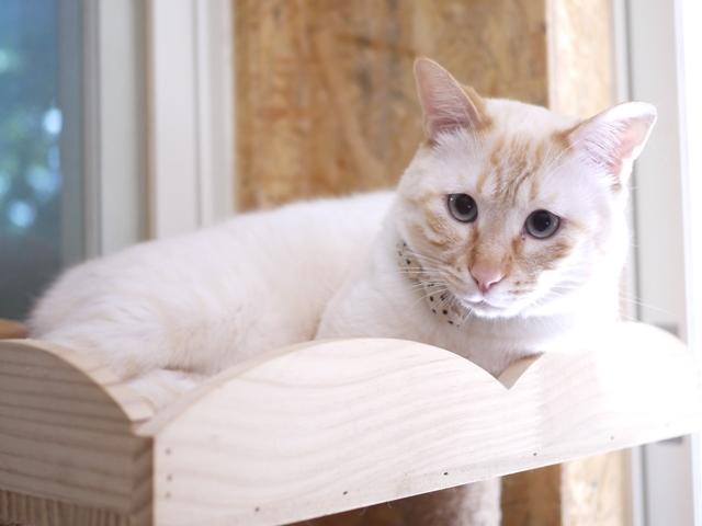 猫のお留守番 チムくん編。_a0143140_23565330.jpg