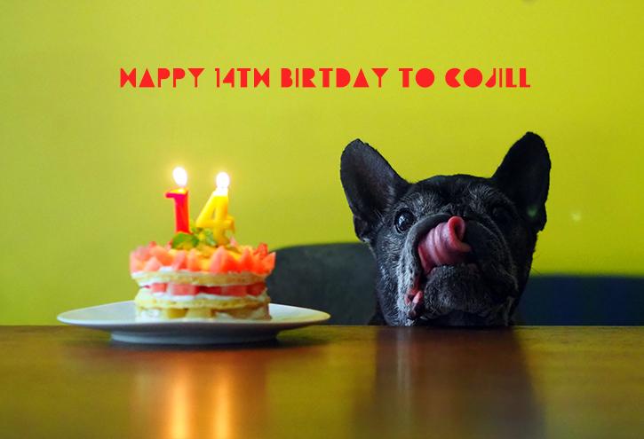 happy 14th birthday to cojill_e0243765_08392960.jpg