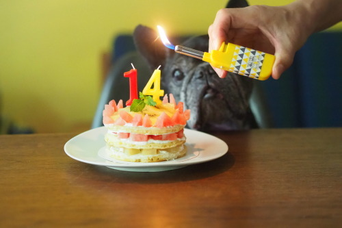 happy 14th birthday to cojill_e0243765_08433616.jpg