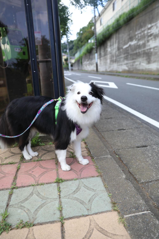 4連休最終日_b0275998_14580900.jpg