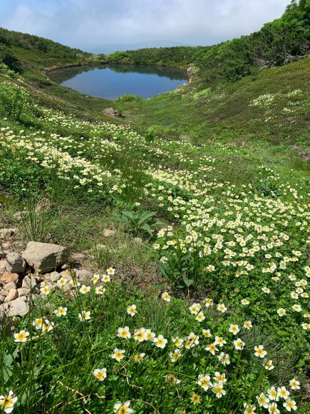 夏の旭岳_f0096216_06023493.jpg