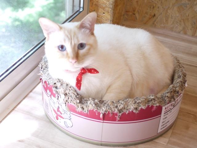猫のお留守番 きりんくん編。_a0143140_00120478.jpg