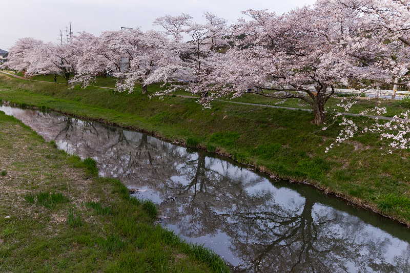 2021桜咲く京都 夕景・やすらぎの道(田原川)_f0155048_22312088.jpg