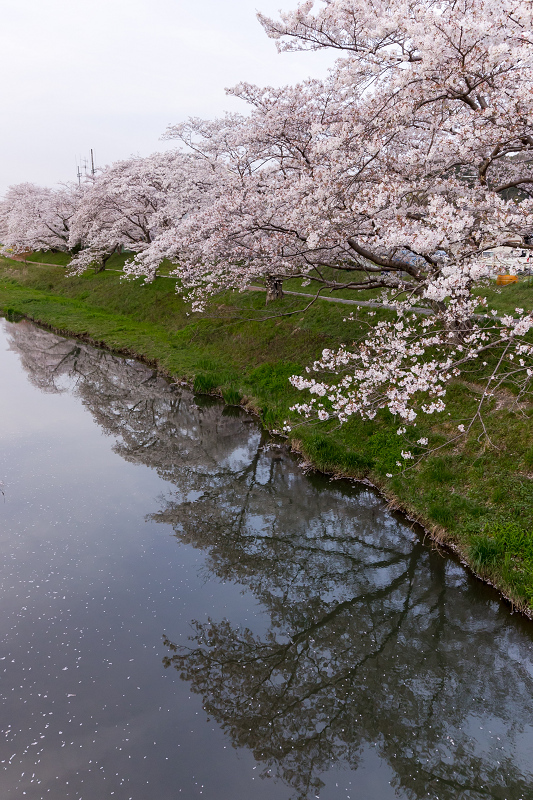 2021桜咲く京都 夕景・やすらぎの道(田原川)_f0155048_22313363.jpg